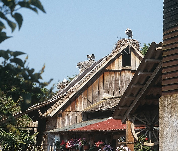 Stork paradise in a traditional village along the Sava. Photo: Martin Schneider-Jacoby